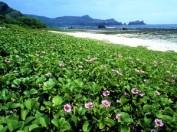 Green_Island.Strand