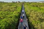 Hongmaogang Mangrove Eco Recreation Area, Hsinchu