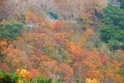 N017_Red Maples, Shihmen Dam, Taoyuan_S